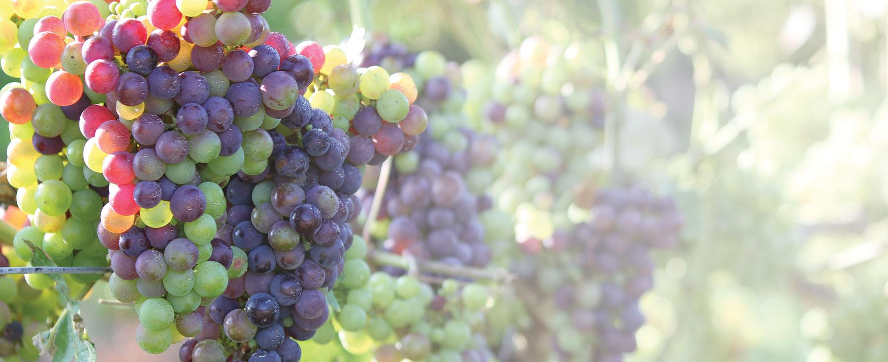 grape-brokering